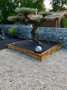 Implantation Olivier bonsaï dans jardinière BEGLES proche BOULIAC