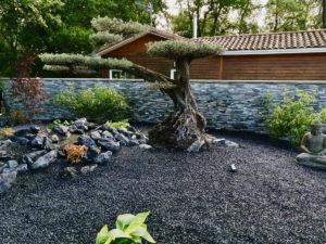 Vente et plantation d'Olivier bonsaï LE BOUSCAT proche PESSAC