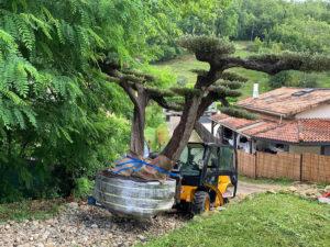 Vente et plantation Olivier bonsaï LATRESNE proche CARIGNAN DE BORDEAUX